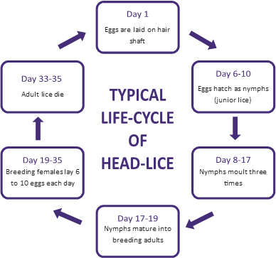 lice life cycle